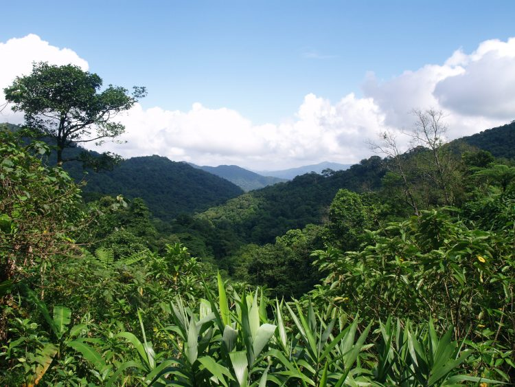 The Western side of the Khe Nuoc Trong forest / Natalie Singleton