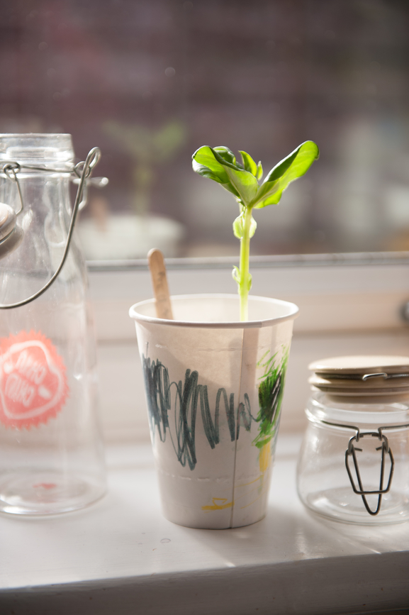 bean seedling growing in a paper cup decorated by a child