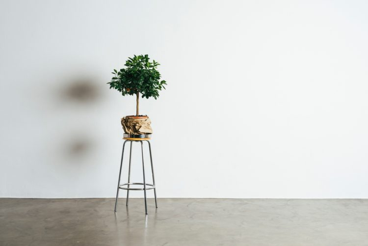 A plant resting on a stool