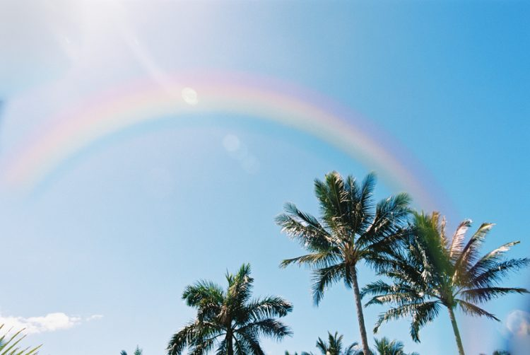 Hawaiin palm trees and a rainbow