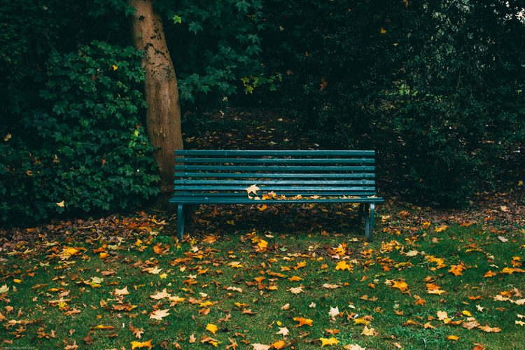 An empty park bench