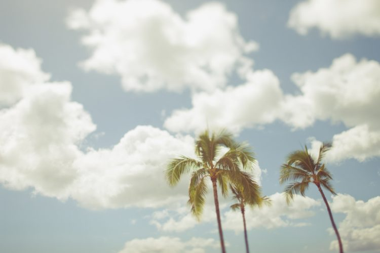 Palm trees against a cloudy blue sky